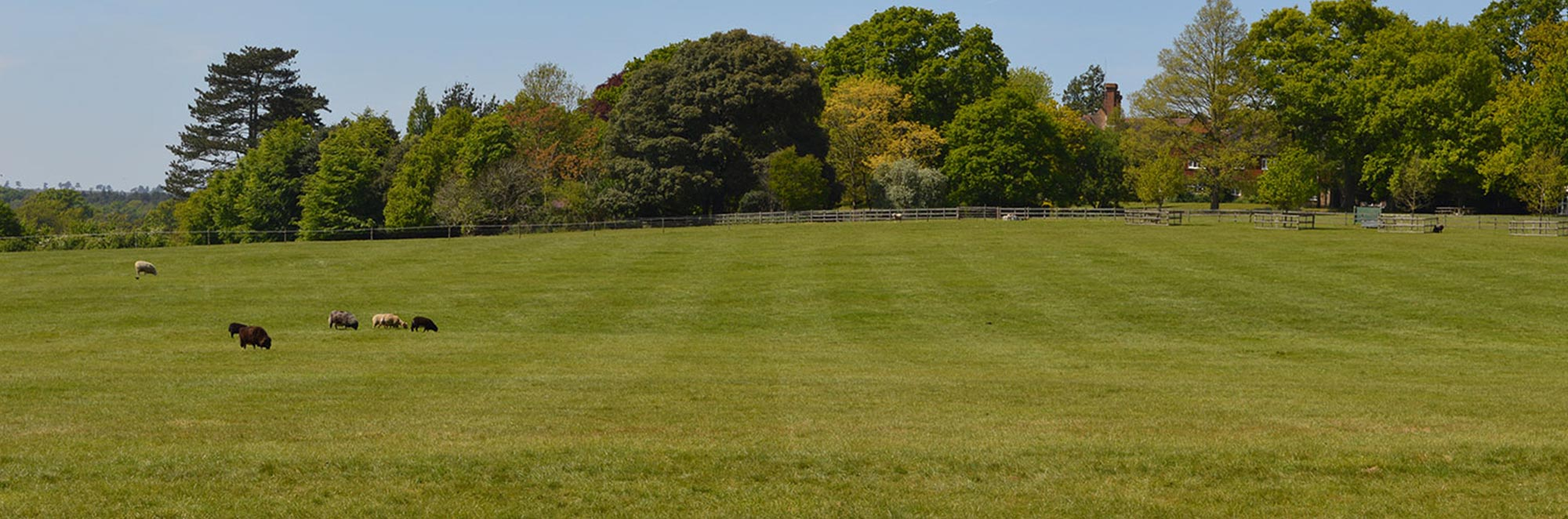 Park Field, near Guildford