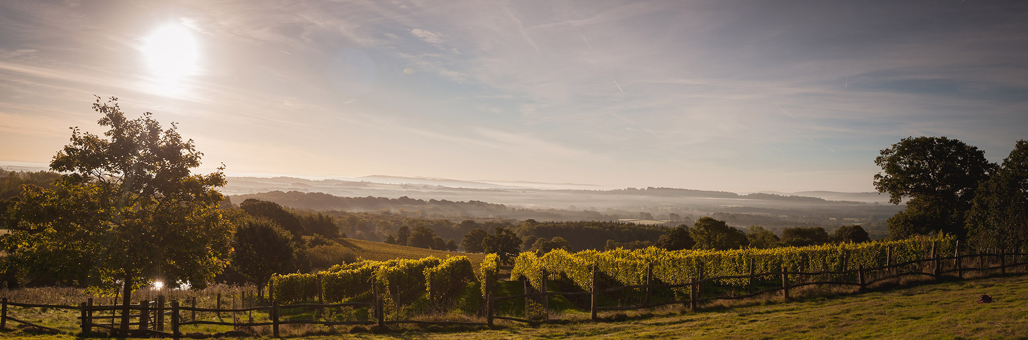 Blackdown Ridge Vineyard
